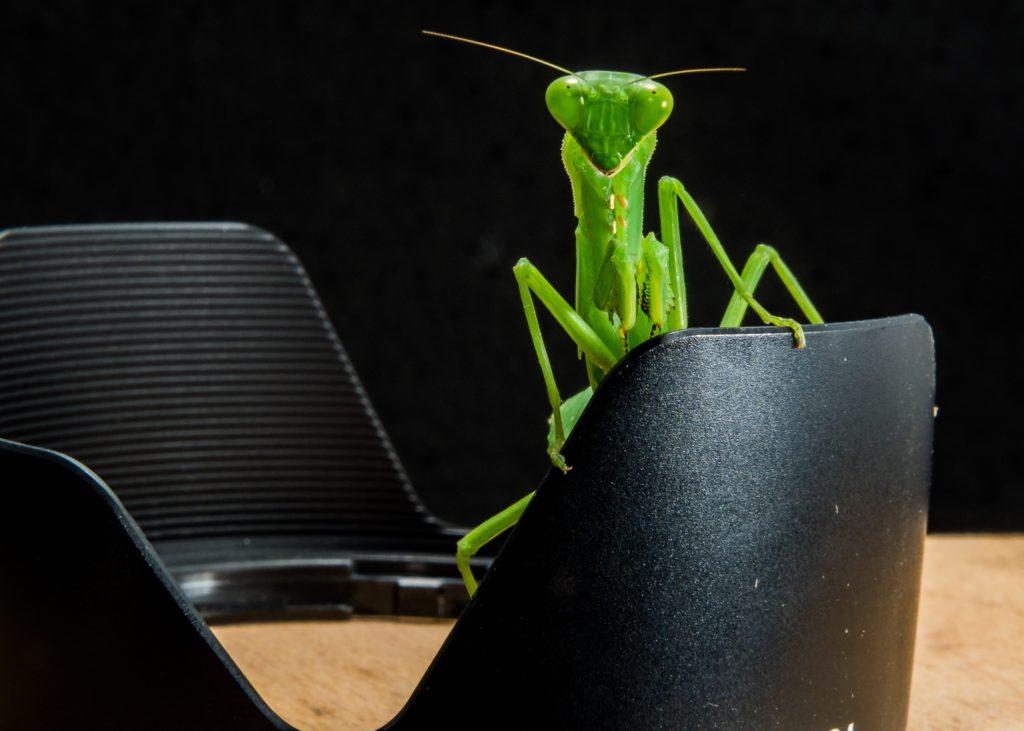 Unser kleiner Freund, der Bug!